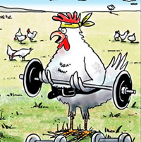 chicken lifting weights